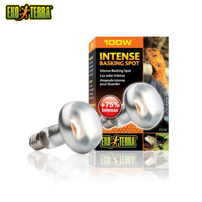 Picture of Exo Terra Sun Glo Intense Basking Spot Lamp 100W