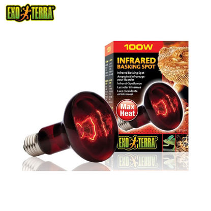 Picture of Exo Terra Heat Glo Infrared Heat Lamp 100W