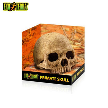 Picture of Exo Terra Primate Skull