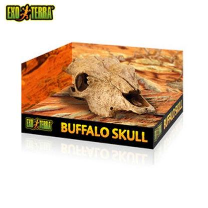 Picture of Exo Terra Buffalo Skull