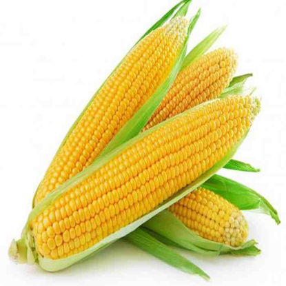 Picture of Mais -Dilaw (Sweet Corn - Yellow)