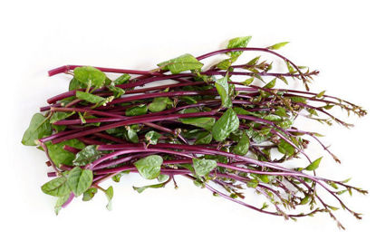 Picture of Alugbati (Malabar spinach)