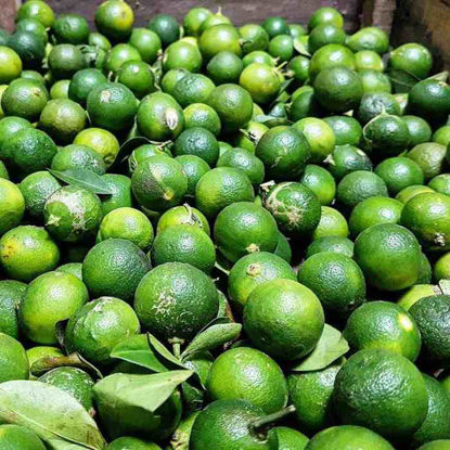 Picture of Kalamansi ( Calamansi)