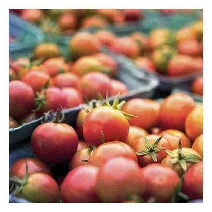 Picture of Kamatis (Tomatoes)