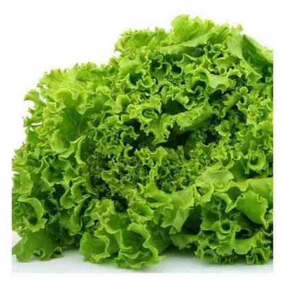 Picture of Lettuce (Green leaf)