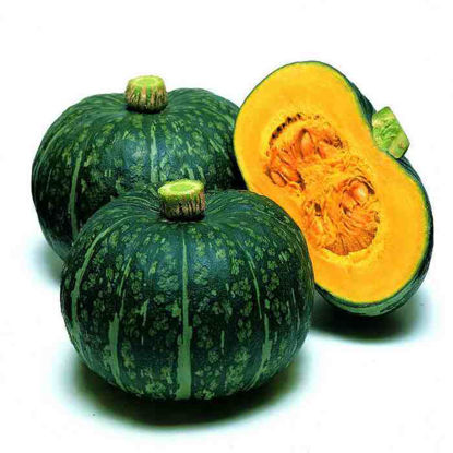 Picture of Kalabasa (Squash)