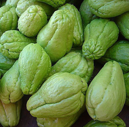 Picture of Sayote (Chayote)