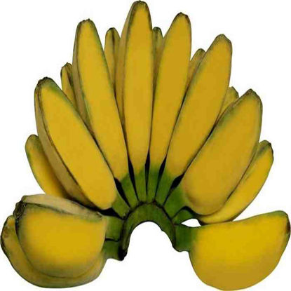 Picture of Saging -Saba (Banana - Saba) -Approx. 1.3-1.6kg