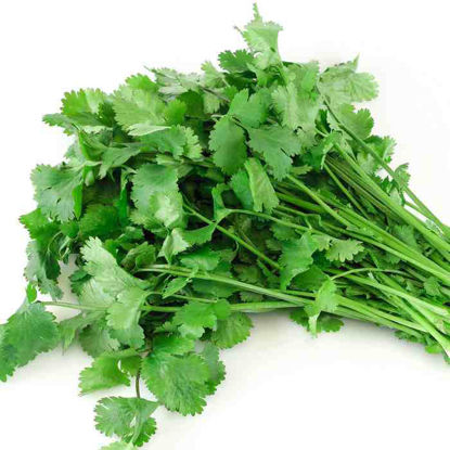 Picture of Cilantro (Coriander)