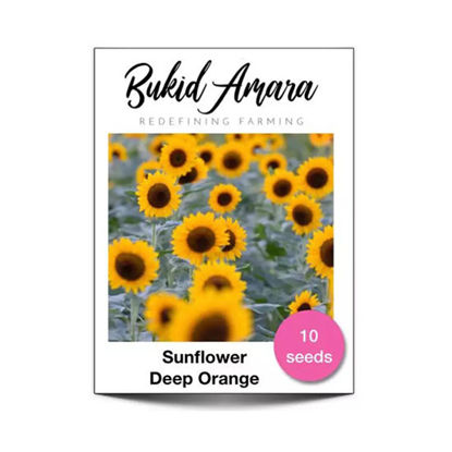 Picture of Bukid Amara Sunflower Deep Orange Flower Seeds (10 seeds/pack)