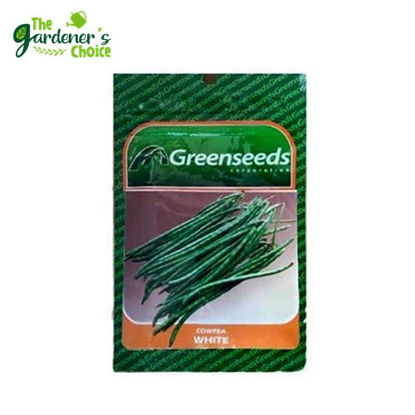 Picture of Cowpea Greenseeds (White) 100 seeds