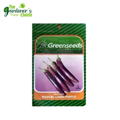 Picture of Eggplan / Talong (Long Purple ) Greenseeds 3grams