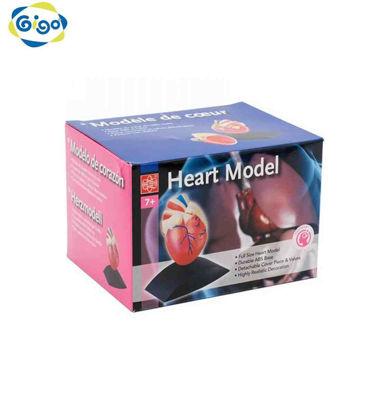 Picture of Gigo Heart Model