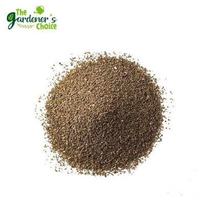 Picture of Celery Ventura Seeds