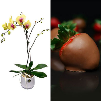 Picture of Classic Orchids + Sofia Strawberries