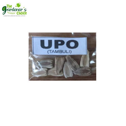 Picture of The Gardener's Choice Upo seeds