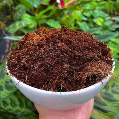 Picture of The Gardener's Choice Choice Coco Peat 100grams